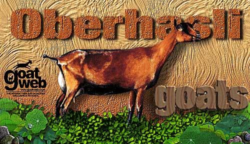 Oberhasli Goats : GoatWeb